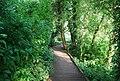 Boardwalk, University Broad, UEA - geograph.org.uk - 1389813.jpg