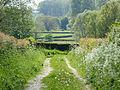 Bocage en face d'un chemin sentier dans le Parc naturel régional de l'Avesnois-09-05-2015.JPG