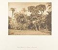 Bois de Dattiers et de Doums, à Hamarneh MET DP131851.jpg