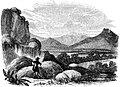 Bolax glebaria-Voyage Southern and Antarctic Regions-2-1847-0339.jpg