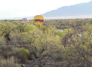 Bosque - Ballooning through the bosque near the Rio Grande River.