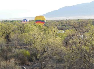 Bosque - Ballooning through the bosque near the Rio Grande River.