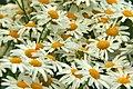 Botanic garden (7462760888).jpg