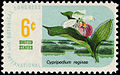 Botanical Congress Lady's-slipper 6c 1969 issue U.S. stamp.jpg