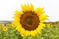 Bowden Sun Maze (38288627282).jpg
