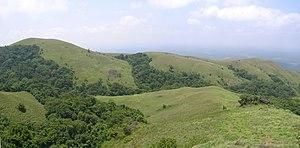 Shola - Shola forest interspersed in valleys among high altitude grasslands on the Brahmagiri Hills