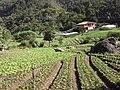 Brasil Rural - panoramio (56).jpg