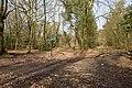 Bridleway junction in Lord's Wood - geograph.org.uk - 1200305.jpg