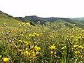 Brisighella, Province of Ravenna, Italy - panoramio (1).jpg