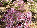 Brookgreen Gardens47.jpg