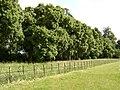 Broughton Grange - geograph.org.uk - 1389513.jpg