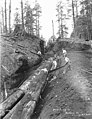 Bucking crew constructing skidway, Wynooche Timber Company, ca 1921 (KINSEY 1042).jpeg
