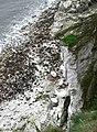 Buckton Cliffs - geograph.org.uk - 813720.jpg