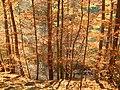 Buki płoną - panoramio.jpg
