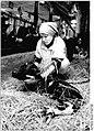 Bundesarchiv Bild 183-1983-0304-005, Lanz, Bäuerin mit Kalb.jpg