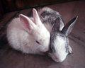 Bunnys.jpg