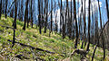 Burn zone Sawtooth NF.jpg