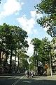 Cây xanh- trên đường Ngô gia Tự -saigon vn - panoramio.jpg