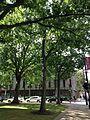 C33-1-Quercus alba (White Oak).JPG