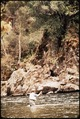 CALIFORNIA--KINGS RIVER - NARA - 542529.tif