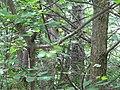 CINLB - 20120909 - végétation1.JPG
