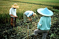 CSIRO ScienceImage 209 Taking a Sample of Soil From a Rice Field.jpg