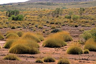 CSIRO ScienceImage 4195 Spinifex country near Barrow Creek NT 1992.jpg