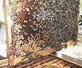 Cadre de corps de ruche.JPG