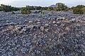 Caja del Rio Plateau - Flickr - aspidoscelis (1).jpg