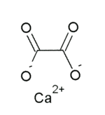 Image illustrative de l'article Oxalate de calcium