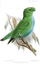 Картина зеленой птицы с маленькими черными пятнами на крыльях, сидящей на ветке