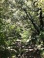 Camí entre La Sala i la Riera d'Escales (maig 2011) - panoramio.jpg