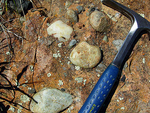 Conglomerate (geology) - A conglomerate at the base of the Cambrian in the Black Hills, South Dakota.