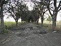 Camino a la hacienda - panoramio.jpg