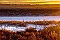 Canada Geese At Sunrise (22684943536).jpg