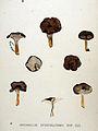 Cantharellus infundibuliformis — Flora Batava — Volume v20.jpg