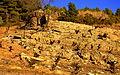 Capçaleres del Foix - 23.jpg