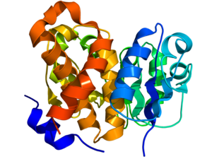 CARKD - Image: Carbohydrate kinase 1KYH