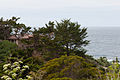 Carmel Highlands May 2011 001.jpg