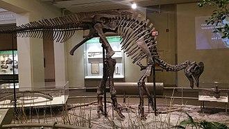 Corythosaurus - Skeleton in Carnegie Museum