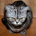 Cat (4615246245).jpg