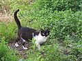 Cat of Lokhvitsya.JPG