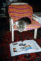 Cat with book 346732763.jpg