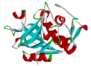 Cathepsin - Structure of Cathepsin K