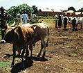 Cattle market Wau.jpg