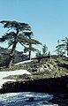 Cedar logs. Snow patches. High & Middle Atlas. 10-04-72 (37755978491).jpg