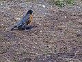 Central ParkBird (New York) (45242058171).jpg