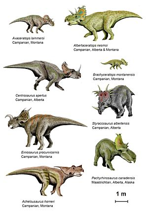 Ceratopsidae - Centrosaurine ceratopsids did not fully develop their cranial ornamentation until fully grown. Scott Sampson argues that comparing ceratopsids to modern mammals with a similar lifecycle can yield insight into the socioecology of the ancient horned dinosaurs.