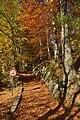Chemin dans la nature luxuriante (22809638205).jpg