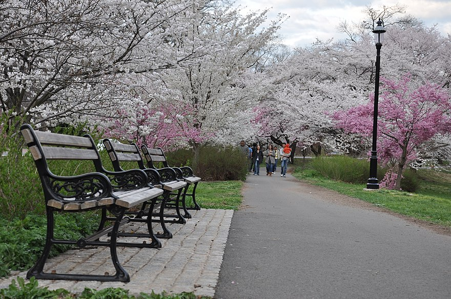 Branch Brook Park Cherry Blossom Festival 2020.Newark New Jersey The Reader Wiki Reader View Of Wikipedia
